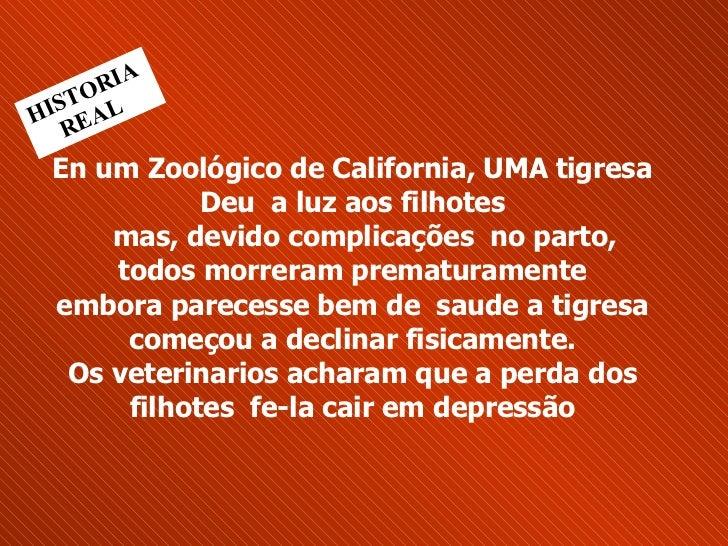 En um Zoológico de California, UMA tigresa Deu  a luz aos filhotes   mas, devido complicações  no parto,  todos morreram...