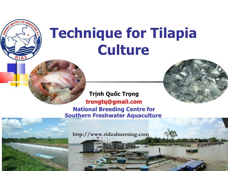 Technique for Tilapia Culture Trịnh Quốc Trọng [email_address] National Breeding Centre for Southern Freshwater Aquacultur...