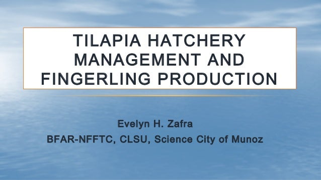 TILAPIA HATCHERY MANAGEMENT AND FINGERLING PRODUCTION Evelyn H. Zafra BFAR-NFFTC, CLSU, Science City of Munoz