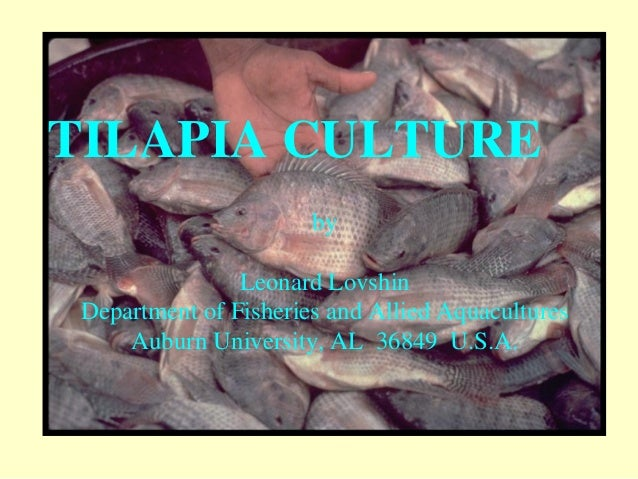TILAPIA CULTURE by Leonard Lovshin Department of Fisheries and Allied Aquacultures Auburn University, AL 36849 U.S.A.