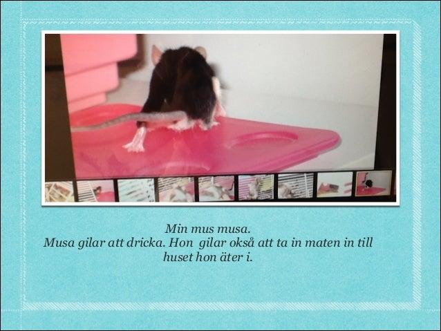 Min mus musa.Musa gilar att dricka. Hon gilar okså att ta in maten in tillhuset hon äter i.