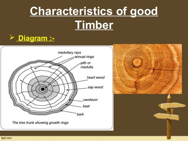 Timber characteristics and defects characteristics of good timber diagram ccuart Images