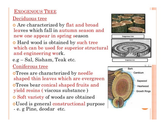 EXOGENOUS TREE Deciduous tree Are characterized by flat and broad leaves which fall in autumn season and new one appear in...
