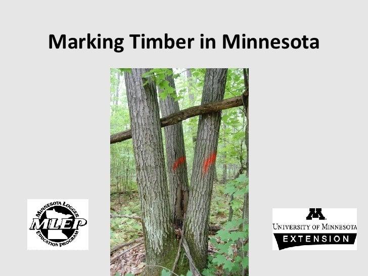 Marking Timber in Minnesota