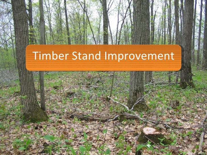 Timber Stand Improvement