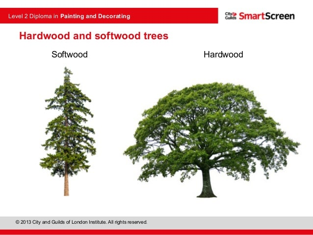 Hardwood And Softwood Trees ~ Timber