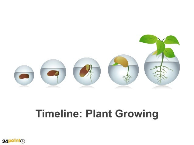 Timeline: Plant Growing  2012 This is dummy text. Go ahead and replace with your own. This is dummy text. Go ahead and rep...
