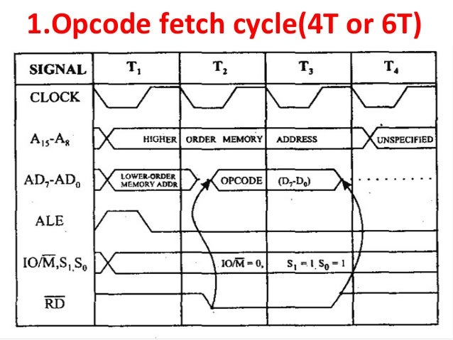 Diagram of fetch library of wiring diagram timing diagram 8085 microprocessor rh slideshare net diagram of fetus in womb and meaning diagram of fetal pig dissection ccuart Images