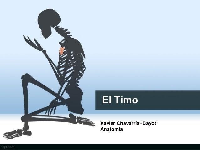El TimoXavier Chavarría−BayotAnatomía