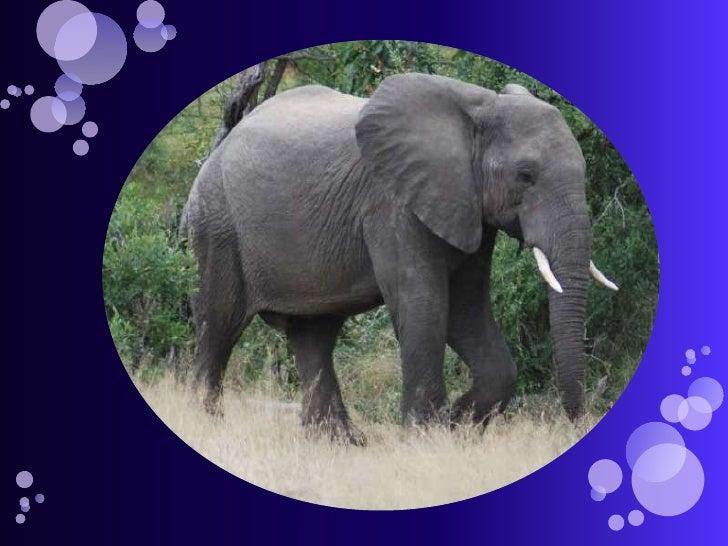 Tinga – Elephants And Rhinos