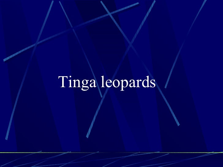 Tinga leopards