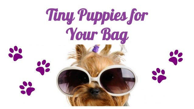 Tiny Puppies for Your Bag