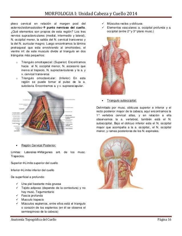 Tipeo topografia del cuello