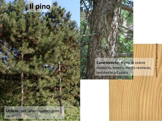 Tipi di legno e utilizzi - Tipi di legno per mobili ...