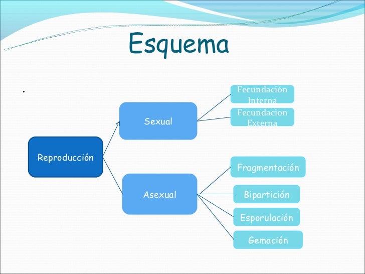Mapa conceptual sobre tipos de reproduccion asexual