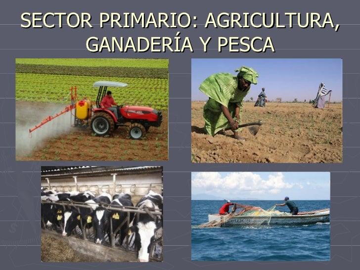 SECTOR PRIMARIO: AGRICULTURA, GANADERÍA Y PESCA