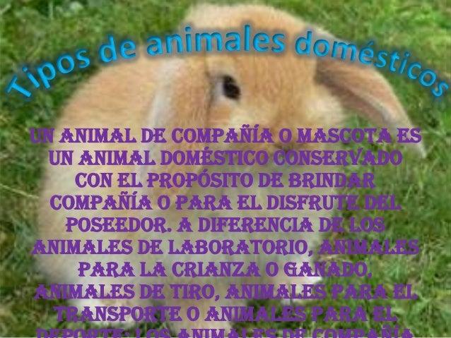 Un animal de compañía o mascota es  un animal doméstico conservado    con el propósito de brindar  compañía o para el disf...