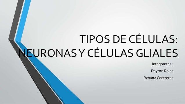 TIPOS DE CÉLULAS: NEURONASY CÉLULAS GLIALES Integrantes : Dayron Rojas Roxana Contreras