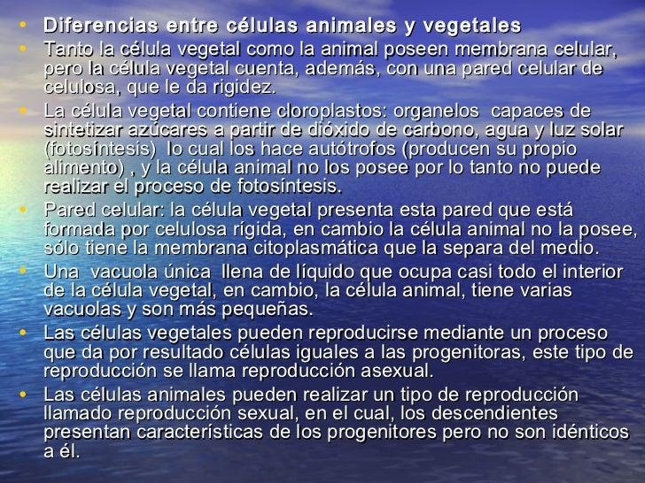• Diferencias entre células animales y vegetales• Tanto la célula vegetal como la animal poseen membrana celular,    pero ...