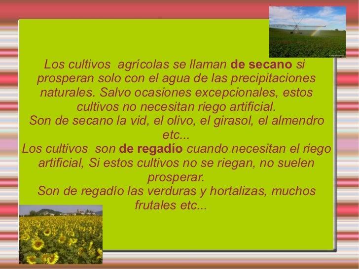 Tipos de cultivos  lola