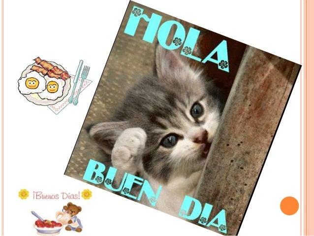 TIPOS DE DIETAS INTEGRANTES: NOELIA HUANCA LLAVE MARCELA ROJAS ALCOCER