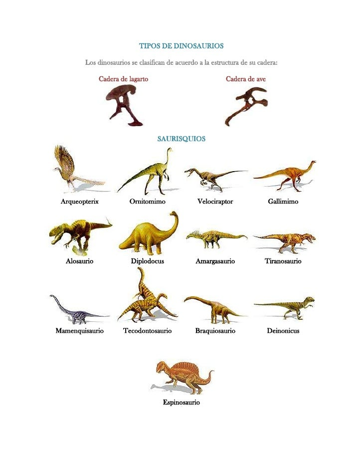 TIPOS DE DINOSAURIOS         Los dinosaurios se clasifican de acuerdo a la estructura de su cadera:                Cadera ...