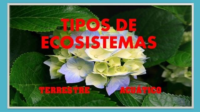 TIPOS DE ECOSISTEMAS TERRESTRE ACUÁTICO