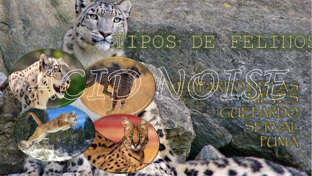 TIPOS DE FELINOS