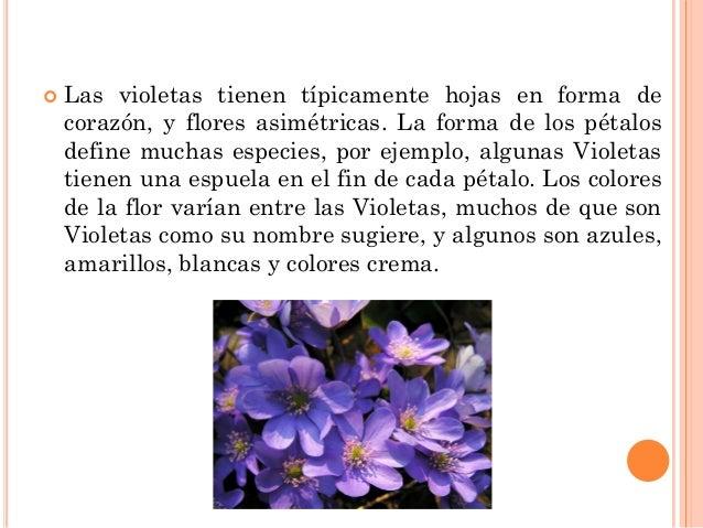 Tipos de flores - Clases de flores y sus nombres ...
