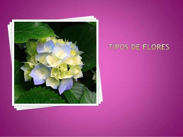 Hibiscuscomúnmente hibiscos,220 especies de lafamilia Malvaceae,típicas de ambientescálidos, en regionestropicales ysubtro...
