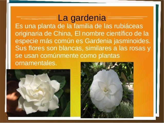 Tipos de flores for Cuales son las plantas ornamentales