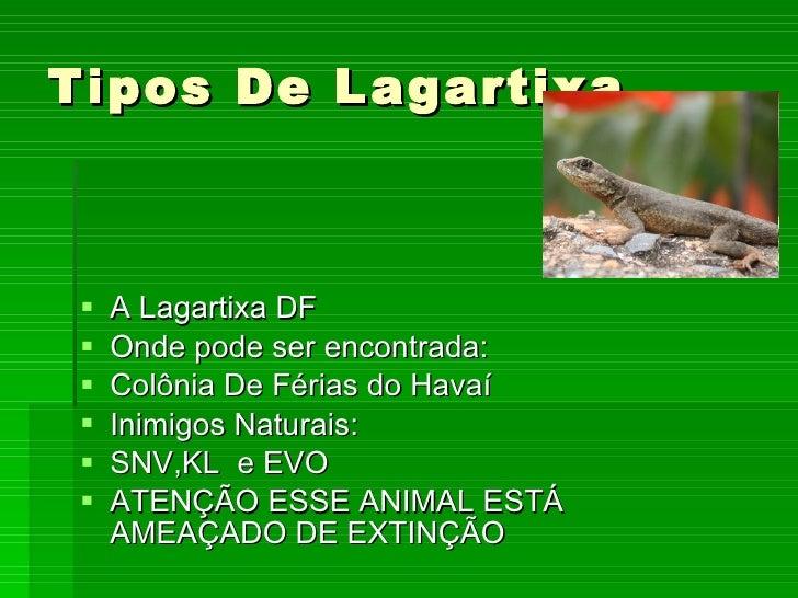 Tipos De Lagartixa <ul><li>A Lagartixa DF </li></ul><ul><li>Onde pode ser encontrada: </li></ul><ul><li>Colônia De Férias ...
