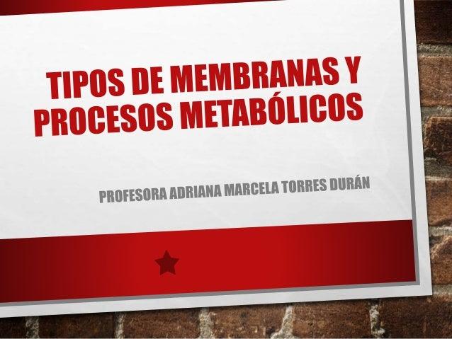 Tipos de membranas y procesos metabólicos presentación
