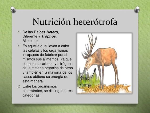 Tipos E Nutrición