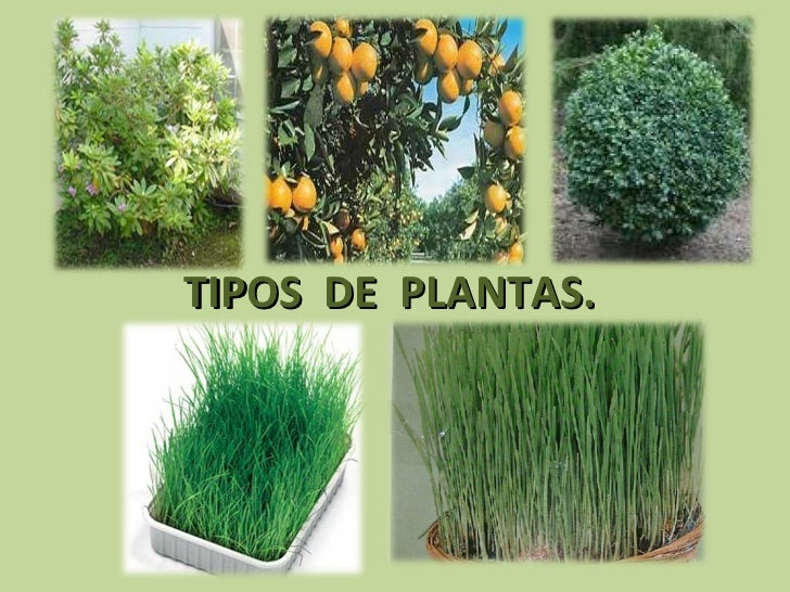 tipos de plantas terrestres related keywords tipos de