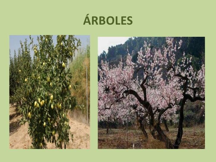 Tipos de plantas - Tipos de plantas ...