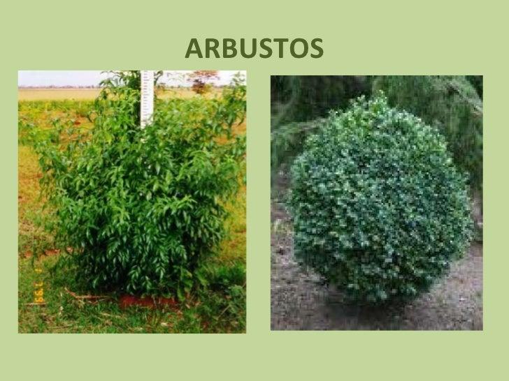 Tipos de plantas - Lista nombre arbustos ...
