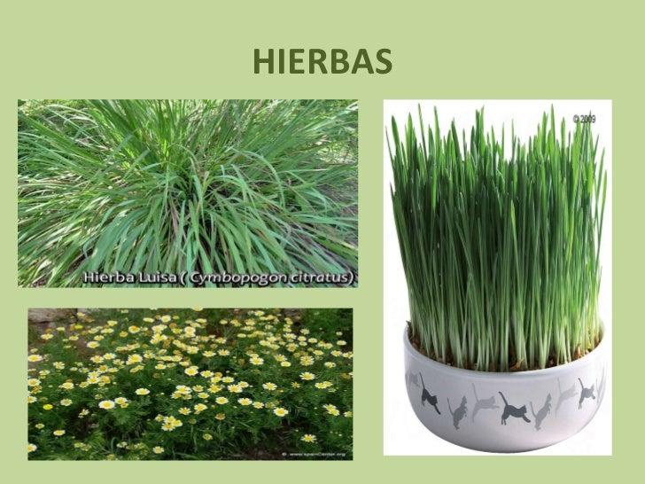 Tipos de plantas for Tipos de arboles y caracteristicas