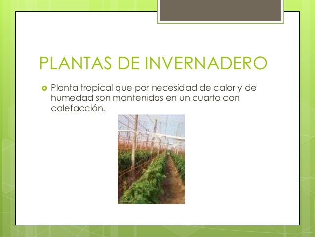 Tipos de plantas for Plantas para invernadero