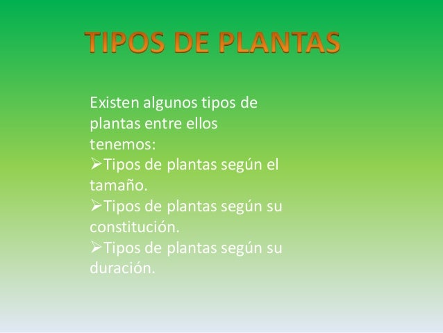 Tipos de planta en to do el mundo tipos de plantas for Cuantos tipos de arboles hay en el mundo
