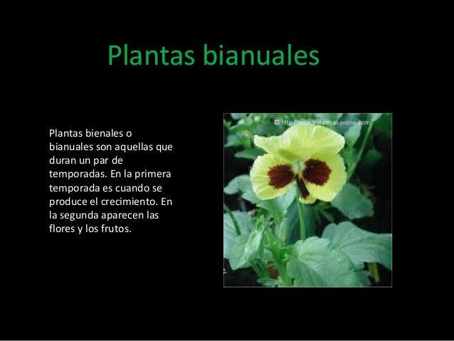 Tipos de plantas for Cuales son las plantas ornamentales y sus nombres