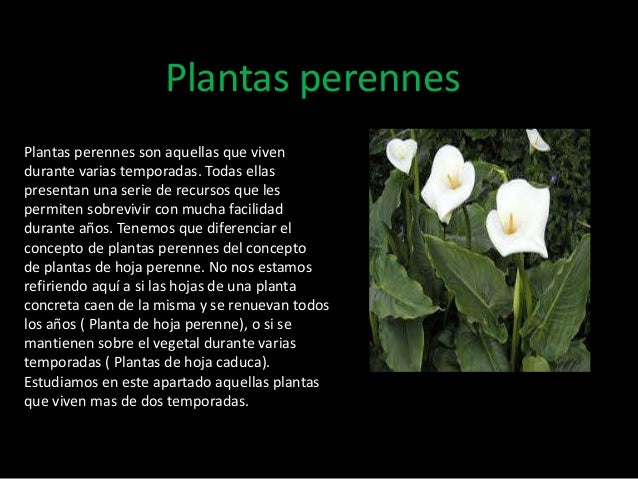 Tipos de plantas - Todo sobre las plantas ...