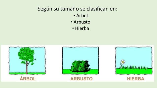 Tipos de plantas for Tipos de arboles y sus caracteristicas