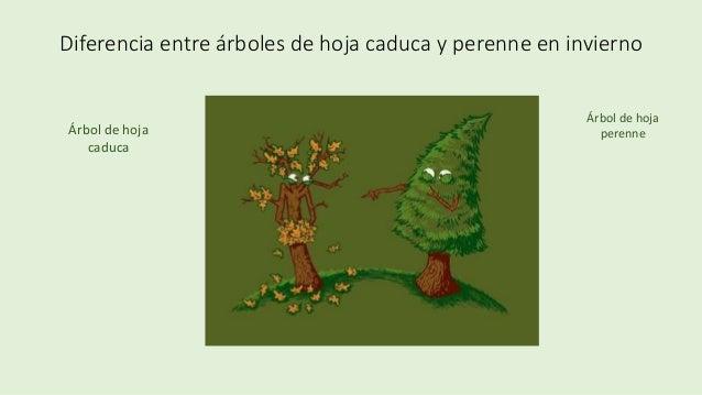 Tipos de plantas for Diferencia entre arboles de hoja caduca y hoja perenne