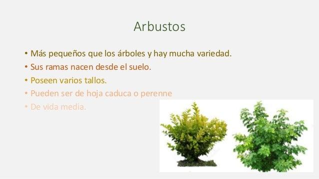 Tipos de plantas for Arbustos de hoja caduca