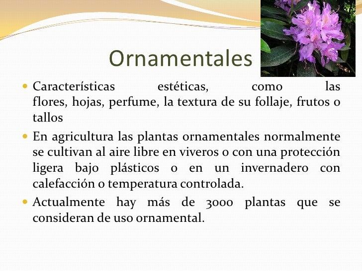 Tipos de plantas blog for Funcion de las plantas ornamentales