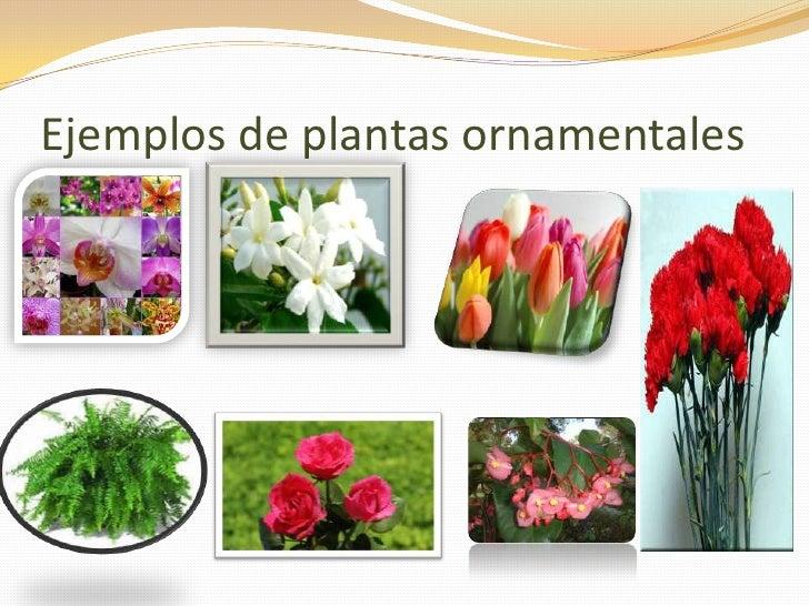 Tipos de plantas blog for Cuales son las plantas ornamentales y sus nombres