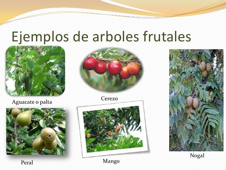 Tipos de plantas blog for Plantas frutales
