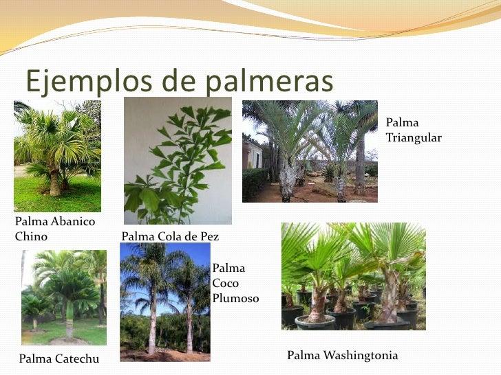 Tipos de plantas blog for Plantas decorativas con sus nombres