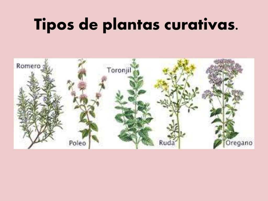 Tipos De Plantas Curativas